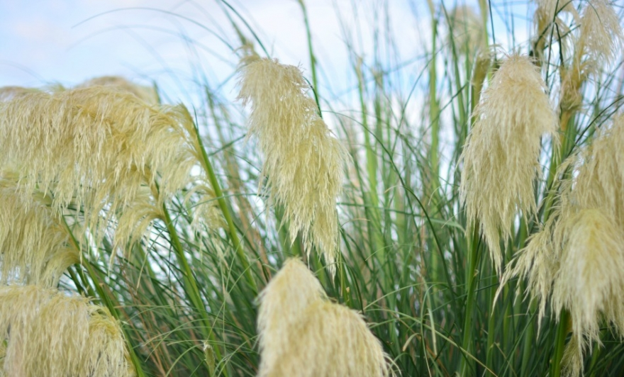 Pampas Grass Weddings